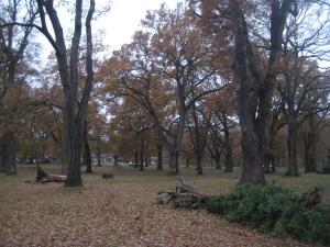 Mildmay Oaks